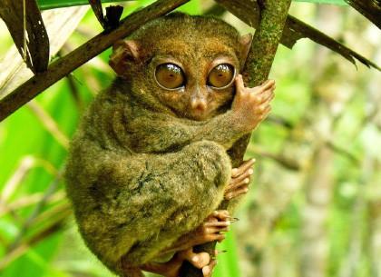 眼镜猴保护区