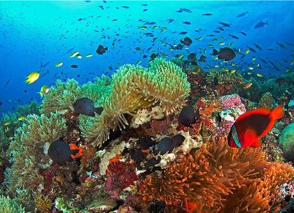 巴里卡萨大断层浮潜