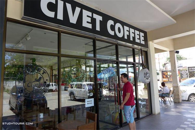 游学菲律宾 麝香猫咖啡