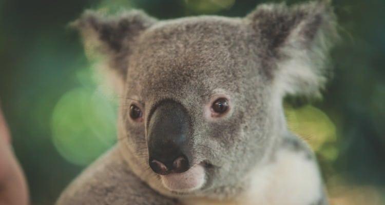 为什么要去澳洲游学 - 2